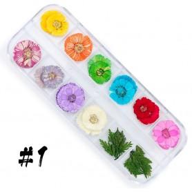 Dry Flower set - 1