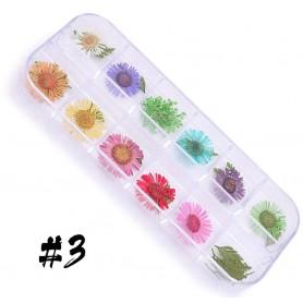 Dry Flower set - 3