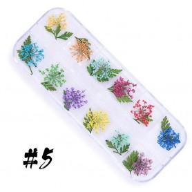 Dry Flower set - 5