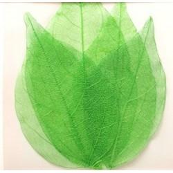 Dry Leaf Green