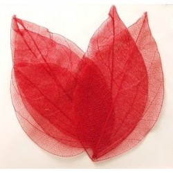 Dry Leaf Red
