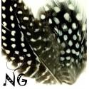 Nail Art Feather White