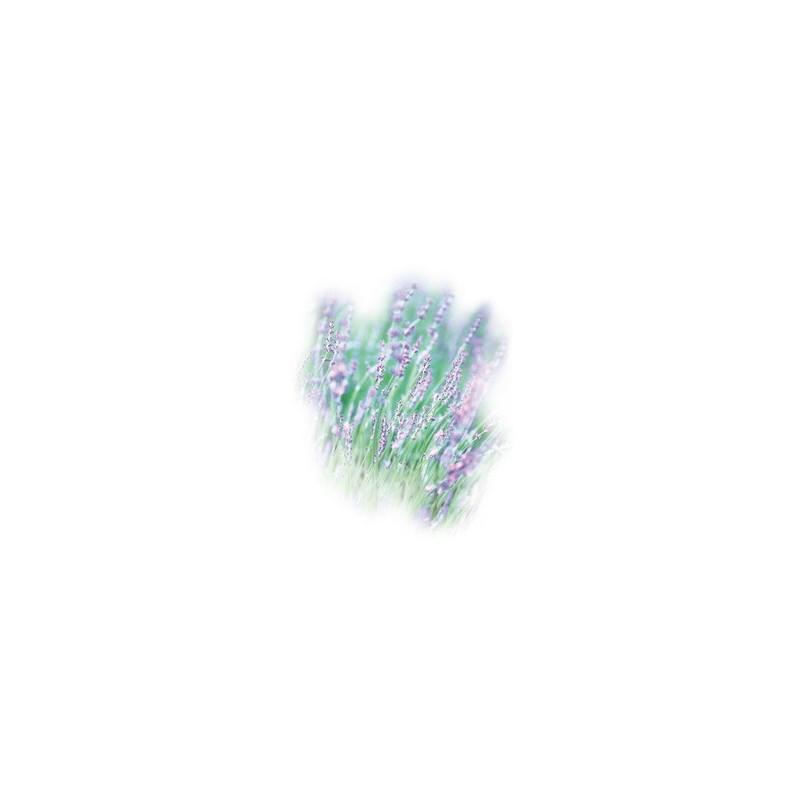 Aroma-Essence Lavendel 10ml for Ultrabreeze